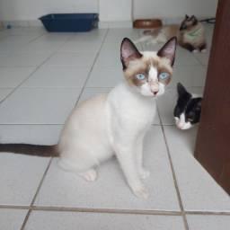 Filhote Gato - Doação