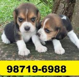 Canil Filhotes Cães Top BH Beagle Poodle Lhasa Maltês Yorkshire Basset Shihtzu Pug