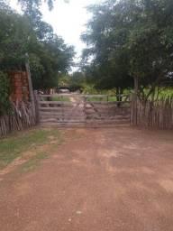 Fazenda em Floriano-pi