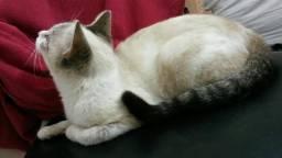 Estou doando essa linda gatinha