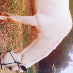 Vendo cavalo manso ou troco