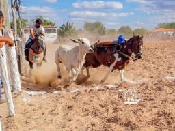 Venda de coberturas PAINT HORSE