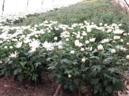 Rural Jardinagem paisagismo decoraçao terra preta pra plantaçao de plantas