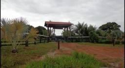 Título do anúncio: Vendo Excelente fazenda 95 hectares 36 Km de Porto Velho