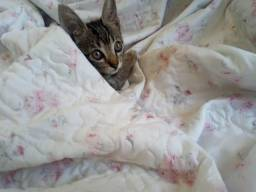 Gatinha malhada de 4 meses