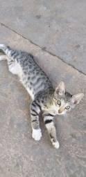 Estou doando uma gatinha