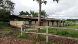Fazenda com 400 hectares há 70 km de Belem do Pará zap (91)988697836