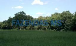 715 hectáres Rio Negro-MS / 60% formada brachiarão restante decumbens,