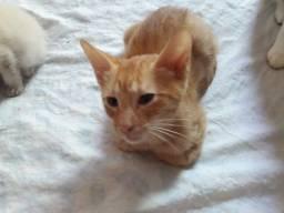 Doação de gatinhos especiais