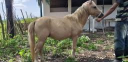 Vendo ou troco poney