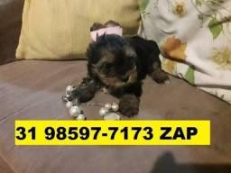 Canil Filhotes Cães Líder Pet BH Yorkshire Beagle Lhasa Basset Shihtzu Maltês Poodle