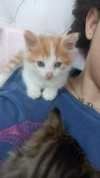 Lindos Filhotes de gatos para Adoção!!