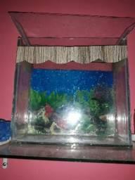 Ale aquário