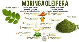 Mil sementes de moringas oleiferas