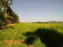 Aluga-se Pasto São Miguel Arcanjo