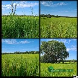 """""""A Fazenda: 406 ha"""" - Terenos, MS, Brasil"""