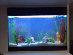 Lindo e espaçoso aquário com as plantas incluídas