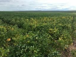 Fazenda Proximo de Tangara da Serra MT