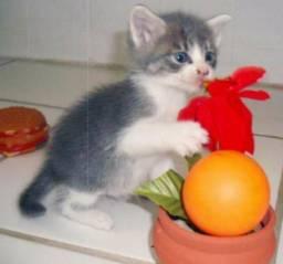 Filhote de gato doação