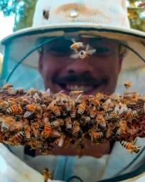 Apicultor profissional ( Retirada de abelhas, vespas e Marimbondos)