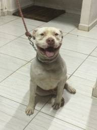 Pitbull red nose