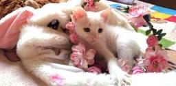 Linda gatinha fêmea para adoção!