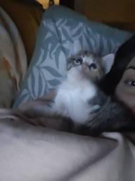 Linda gatinha, adoção responsável
