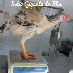 Indio gigante