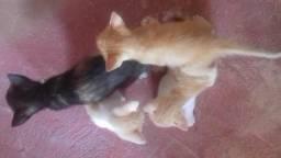 Estou doando esses gatinhos ñ tenho como ficar com eles