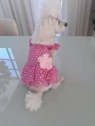 Vendo roupa de cachorro
