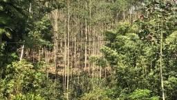Vendo lindo sítio em Jaraguá do Sul