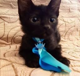 Gato, gatos, gatinho, adoção, doação.