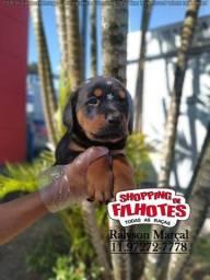 Rotteweiler maior loja de filhotes do Brasil 12 clínicas veterinárias para te atender!