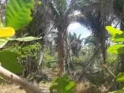 Propriedade Rural com 50 hectares em Altos - Piauí