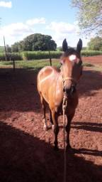 Cavalo de laço pé
