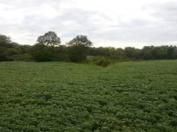 Área Rural c/ 27 Hectares, RS-149 -Santuário- Restinga Seca-10070