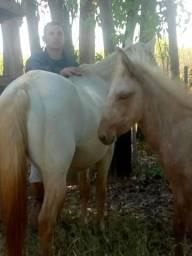Égua Prenha