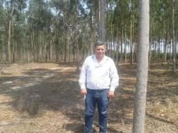 Barbada,120 há, 36 hectares eucaliptos,córrego, Região de Reserva do Cabaçal-MT