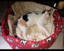2 gatinhas lindas pra adoção.