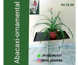Lindas Plantas Ornamentais para decorar e renovar seu ambiente