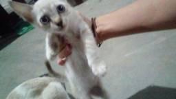 Doaçao de filhote de  gato