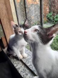 Gatinhas fêmeas com castração garantida