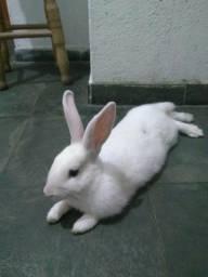 Coelha Doação