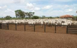 Fazenda Mato Grosso - Araguainha/Ponte branca - com 1.600 alqueires paulista