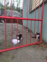 Gatos peludinhos para Adoção
