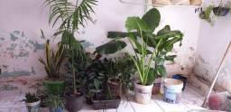 Vendo essas belas Plantas!