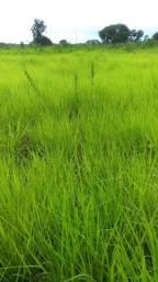 Título do anúncio: Fazenda 5.060 há (1.045 alq) para projetos no Agronegócios