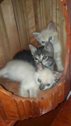 Doação de gatos *... * watss