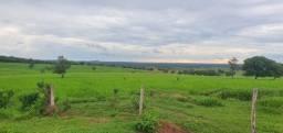 Título do anúncio:  Fazenda Dupla Aptidão de 1.000 hectares no município de Alcinópolis