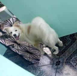 Doação de Cachorro
